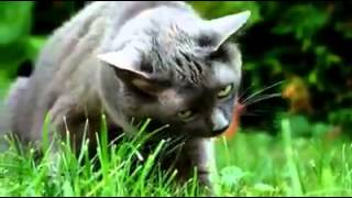 Cats Puking to Techno Eurodance hit Calabria (Drunkenmunky Mix)