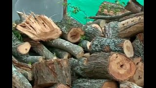Indignación en Bucaramanga por tala de varios árboles para construir apartamentos | Noticias Caracol