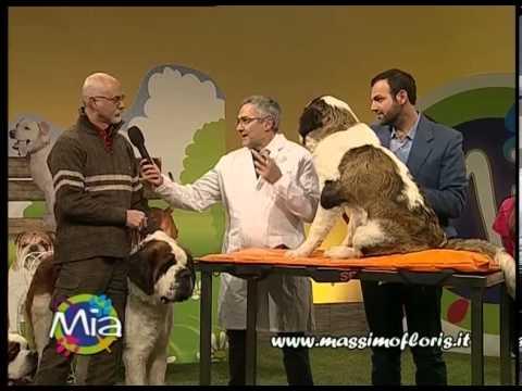 L'angolo del veterinario di Massimo Floris parla del SAN BERNARDO a MIA Mondo Intorno agli Animali
