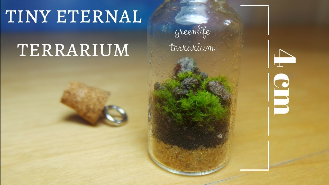 Tiny Garden Mini Terrarium D I Y The Smallest Ecosystem Youtube
