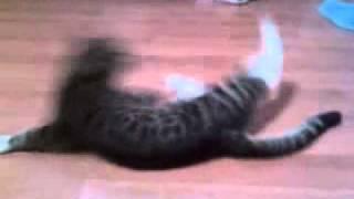 Кот танцует брэк данс!!