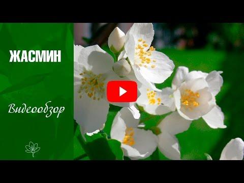 Самые неприхотливые садовые цветы. Сайт Садовый мир