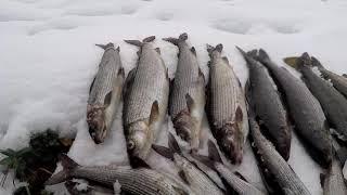 Хариус Погода Осень Удочка Погода рыбалке не помеха