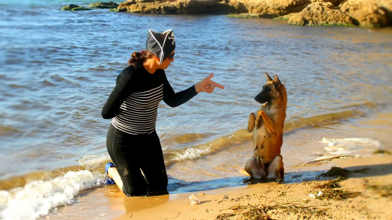 dressage de chien tunisie cont 27058688