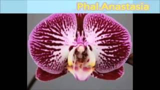 Названия и сорта орхидей часть 1