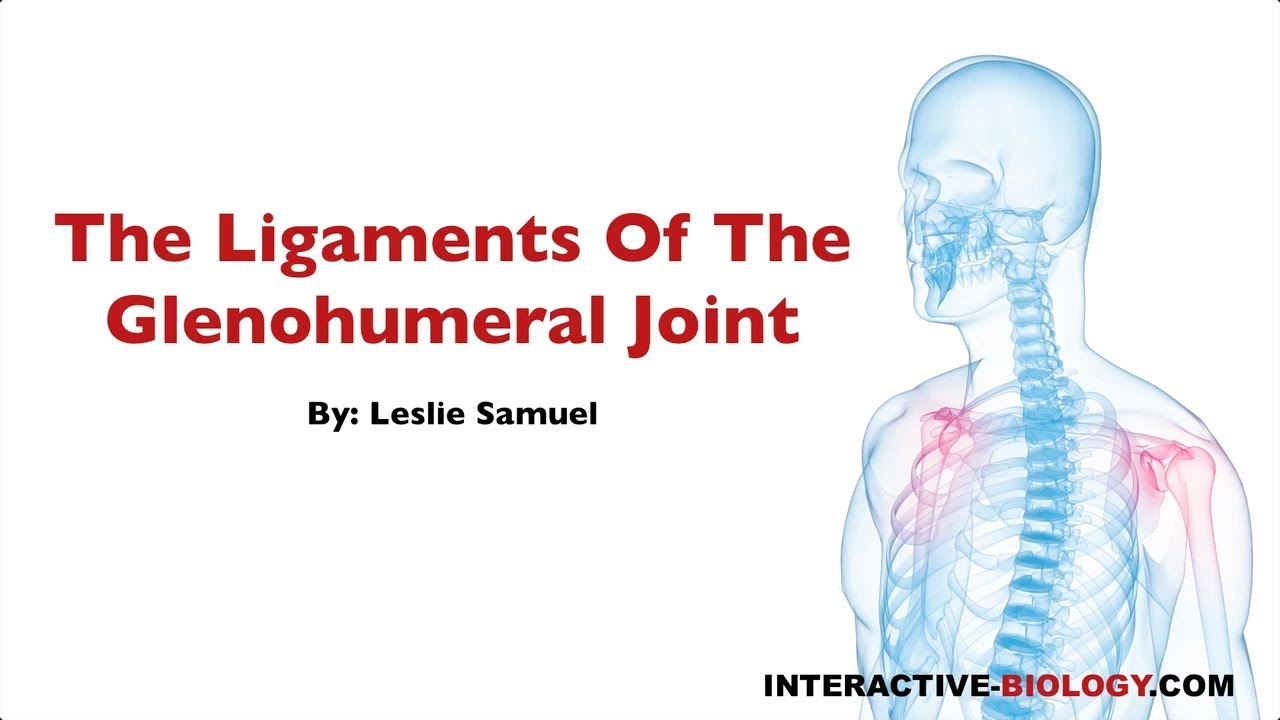079 The Ligaments of the Glenohumeral Joint - YouTube