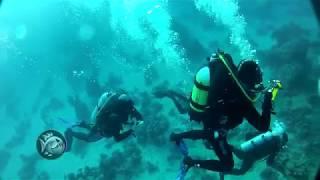 Safary  Лазим по затонувшему кораблю  Дайвинг  Diving