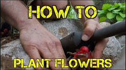 How to Plant FLOWERS the EZ Way - Landscaping and Gardening Tips