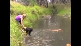 Free Top Dog Training Tip #3 - Learning To Swim