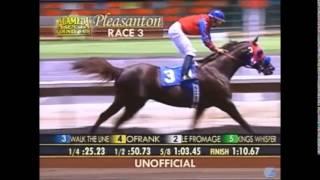 WALK THE LINE / Champion Arabian Racing Stallion