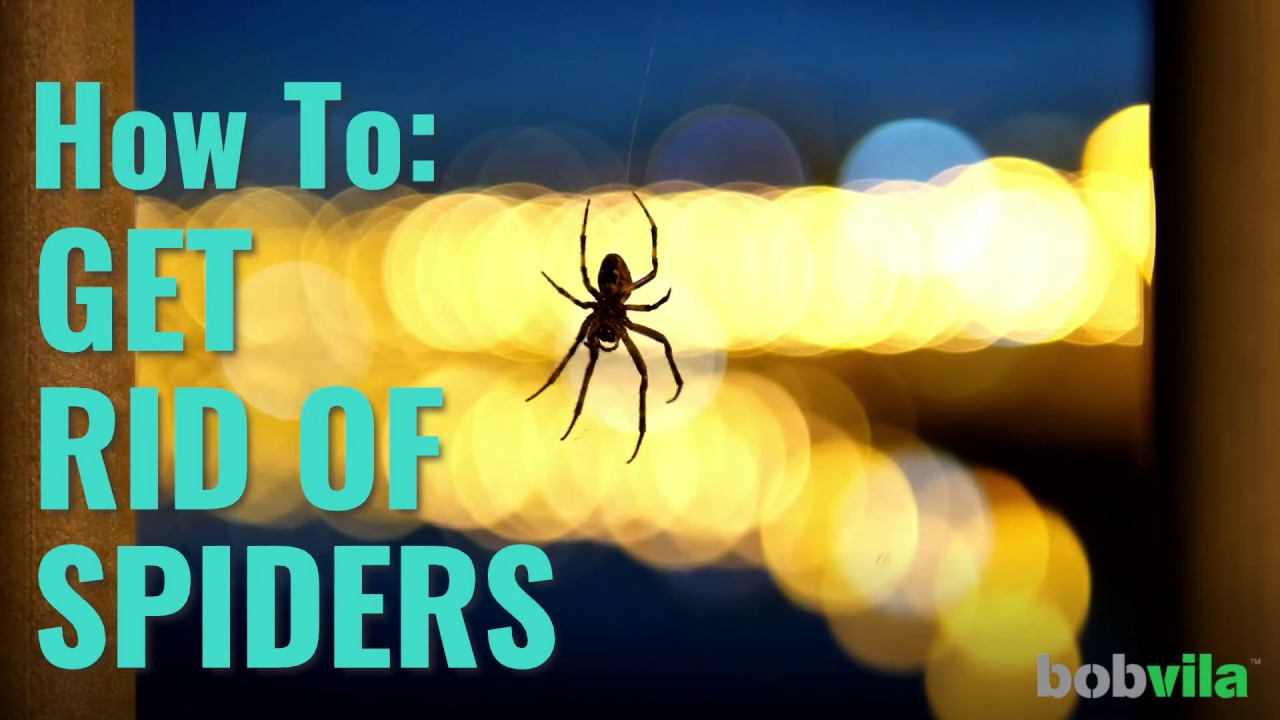 how to get rid of spiders for good
