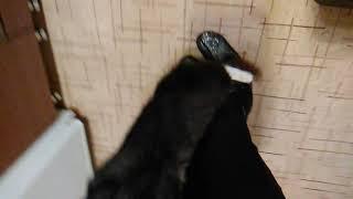 Это мой кот так реагирует на валерьянку ,на берем 3 лайка и тогда выйдет следующей видео