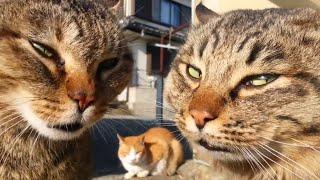 #2月22日は猫の日 真剣なのに何故か面白い猫のケンカの動画まとめ