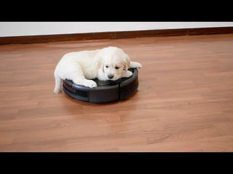 Puppy Rides On Roomba