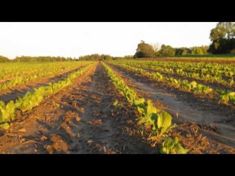 Pfennings Organic Farm