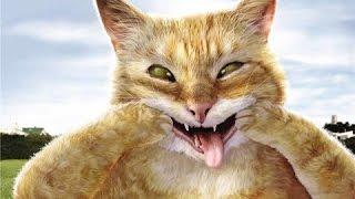 Подборка самых новых приколов с котами и кошками 2017!!! топовая подборка(Сats LIVE)