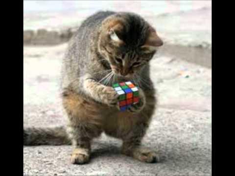 :O Un Chat Fait Un Rubik's Cube ! :O