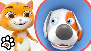Hund Kegel : Paw Pack | Lustige Cartoon-Shows | Comedy-Videos für Kinder von Little Treehouse