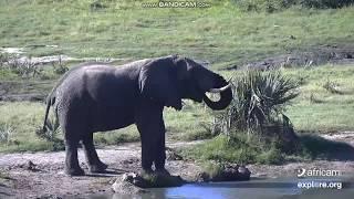 Słoń afrykański przy wodopoju -świat zwierząt Afryki - 20.02.2019 r