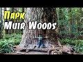 Muir Woods - парк с красными деревьями