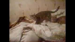 Кот та кровать