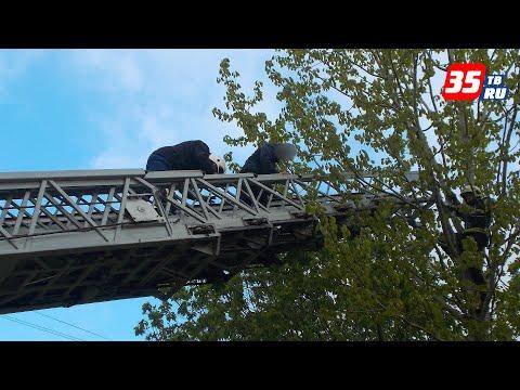 12-летнего мальчика сняли с дерева спасатели в Череповце