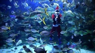 Download Video Scuba diving Santa attract crowds in Kuala Lumpur MP3 3GP MP4