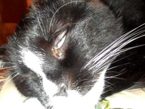 my cat seems sad
