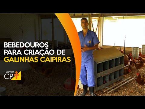 Clique e veja o vídeo Conheça os bebedouros adequados na criação de frango e galinha caipira