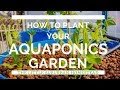 How To Plant your Aquaponics Garden - Backyard Aquaponics VLOG 4 - The Little Suburban Homestead