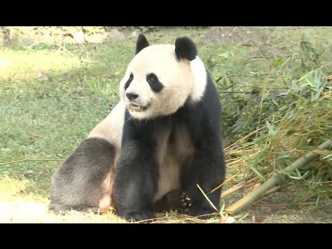 Madrid Zoo Names Latest Panda
