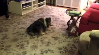 Old Dog Vestibular Disease