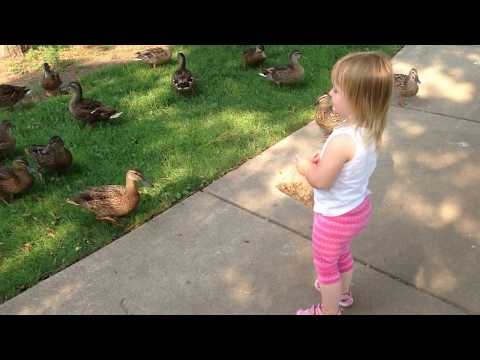Two Years Old Feeding The Ducks In Park