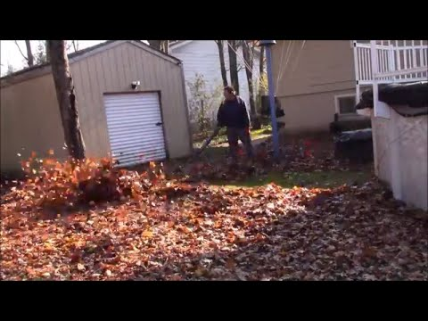 The most leaves possible in one yard cleaned up with DR leaf vac