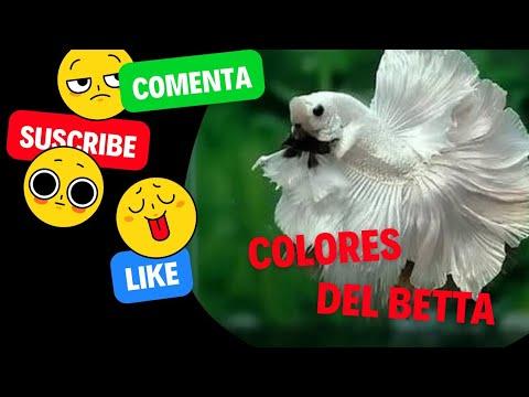 colores del pez betta