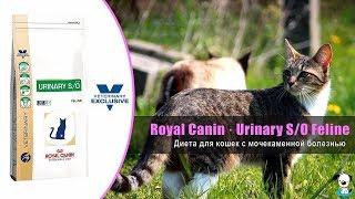 Диета для кошек при лечении и профилактике мочекаменной болезни · Royal Canin Urinary SO Feline