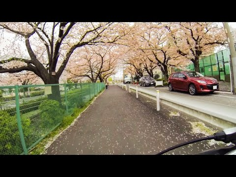 TOKYO HANAMI BIKE RIDE with GoPro - Direct Route from Haneda Airport Entrance Door