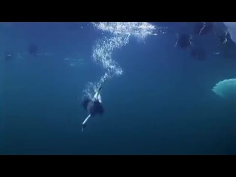 Ducks diving for mussels | Planet Earth | BBC