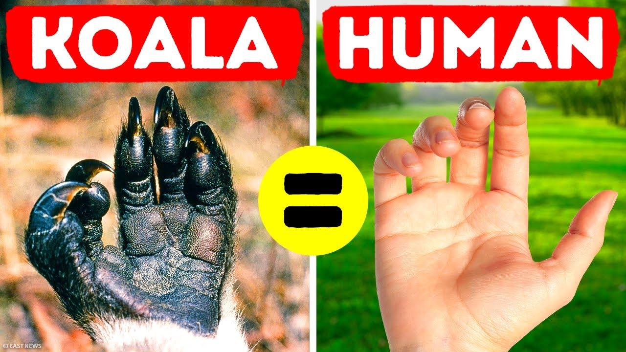 36 fatos raros de animais que você esqueceu do Google + vídeo