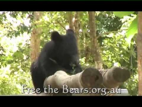 Freeing the Bears in Cambodia and Worldwide—on RodMcNeil.TV