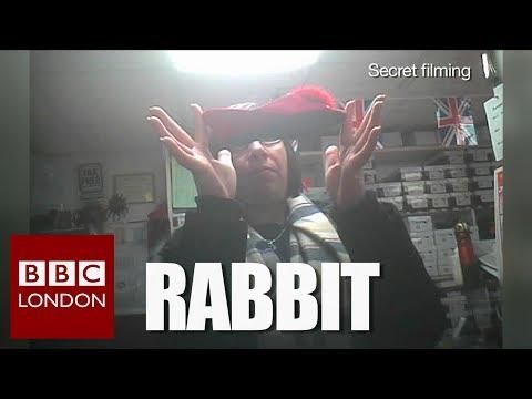 Animal fur sold as fakes – BBC London News