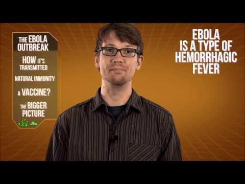 Крымская геморрагическая лихорадка - причины, симптомы