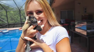 NEW! BABY LEMUR Play Time!