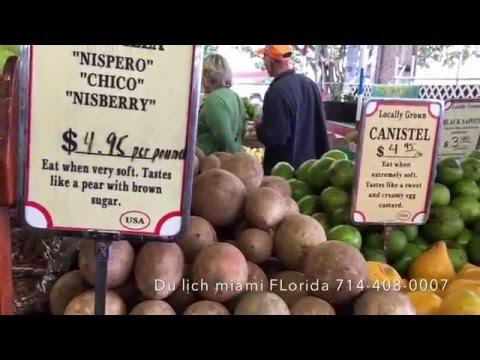 Vuon trai cay o Homestace Florida nhiều loại trai cây và sinh tố SABOCHE
