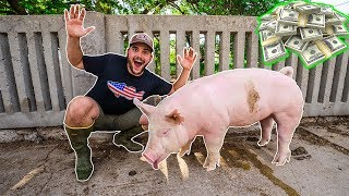 Showing My FARM PIGS at the FAIR!!! ($20,000 PRIZE)