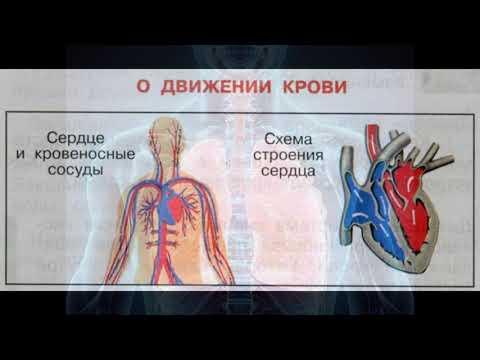 """Окружающий мир 3 класс ч.1, тема урока """"Дыхание и кровообращение"""", с.144-146, Школа России."""