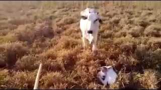 Herding - Donkey Protection Video