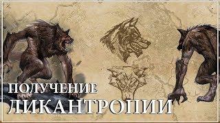 The Elder Scrolls Online — Как стать оборотнем
