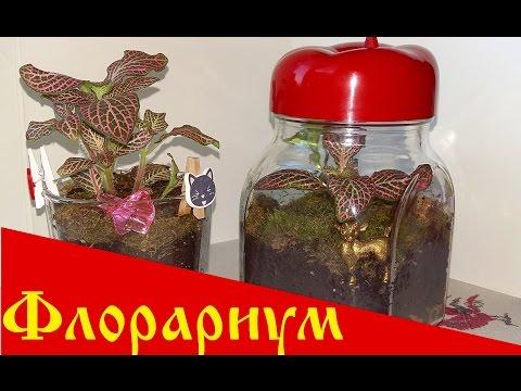 DIY Флорариум / Сад в стекле