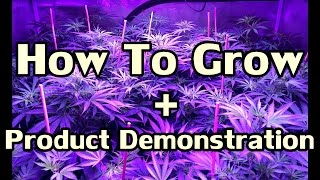 How To Grow Cannabis From Seed by Skunk Labs ft  NVclosetmedgrower & Mr  Tight